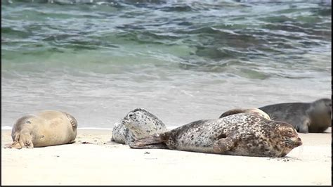 Seals bouncing on the beach - YouTube